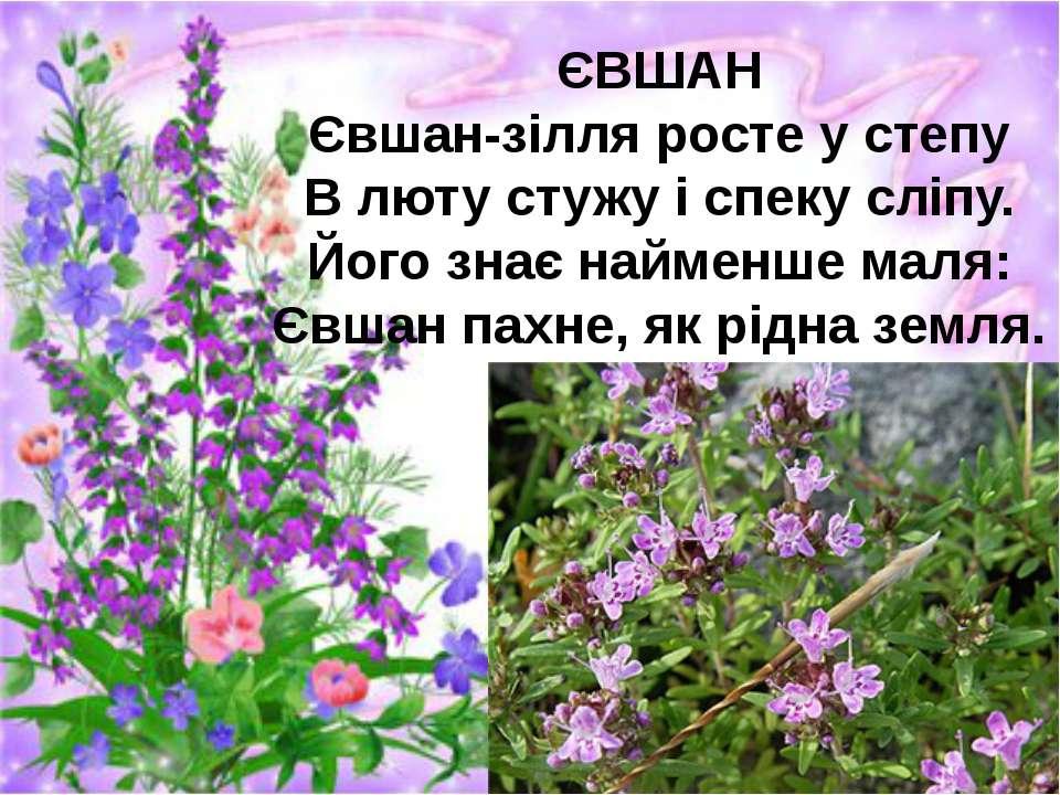 ЄВШАН Євшан-зілля росте у степу В люту стужу і спеку сліпу. Його знає найменш...