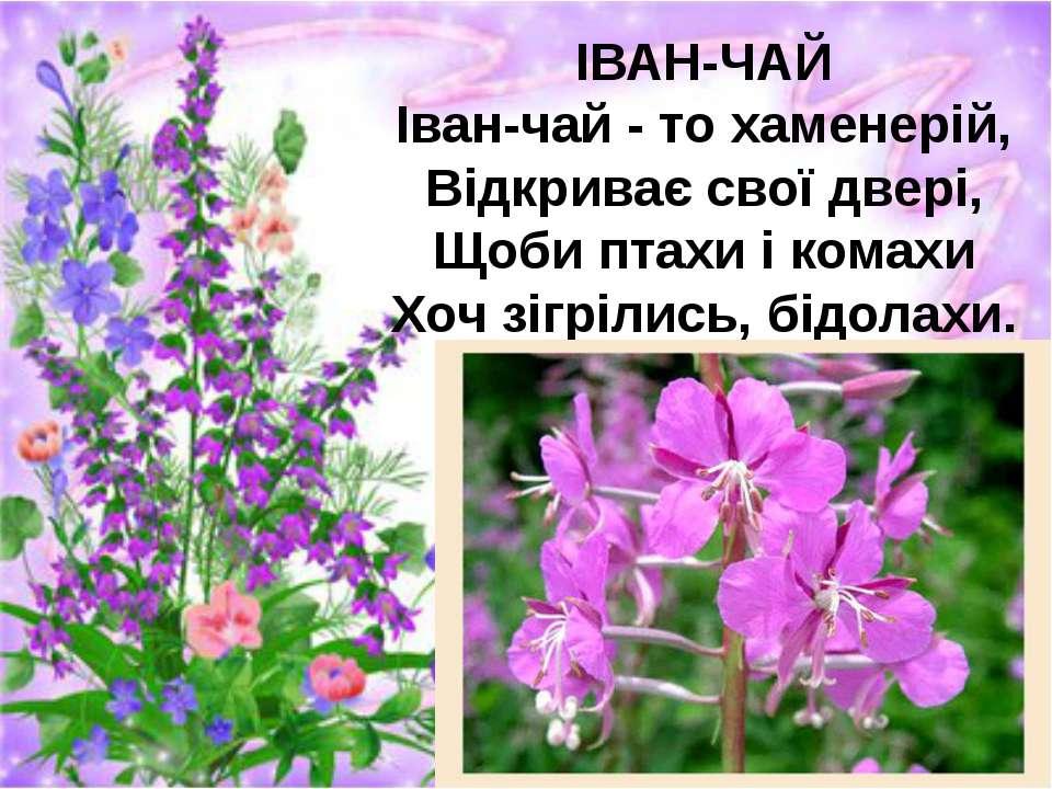 ІВАН-ЧАЙ Іван-чай - то хаменерій, Відкриває свої двері, Щоби птахи і комахи Х...
