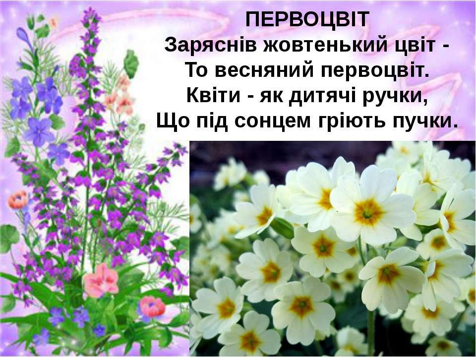 ПЕРВОЦВІТ Заряснів жовтенький цвіт - То весняний первоцвіт. Квіти - як дитячі...
