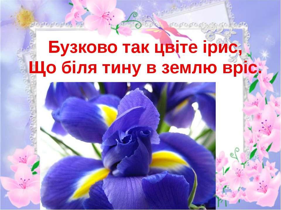 Бузково так цвіте ірис, Що біля тину в землю вріс.