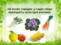 На полях ,городах ,у садах люди вирощують культурні рослини.