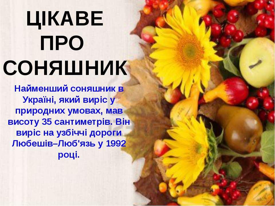 ЦІКАВЕ ПРО СОНЯШНИК Найменший соняшник в Україні, який виріс у природних умов...