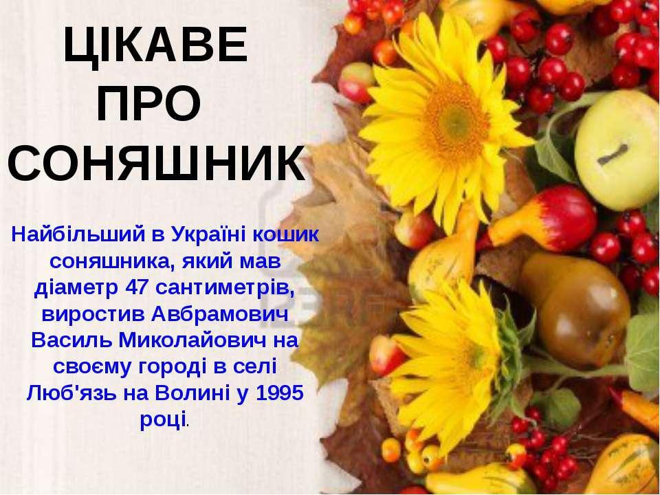 ЦІКАВЕ ПРО СОНЯШНИК Найбільший в Україні кошик соняшника, який мав діаметр 47...