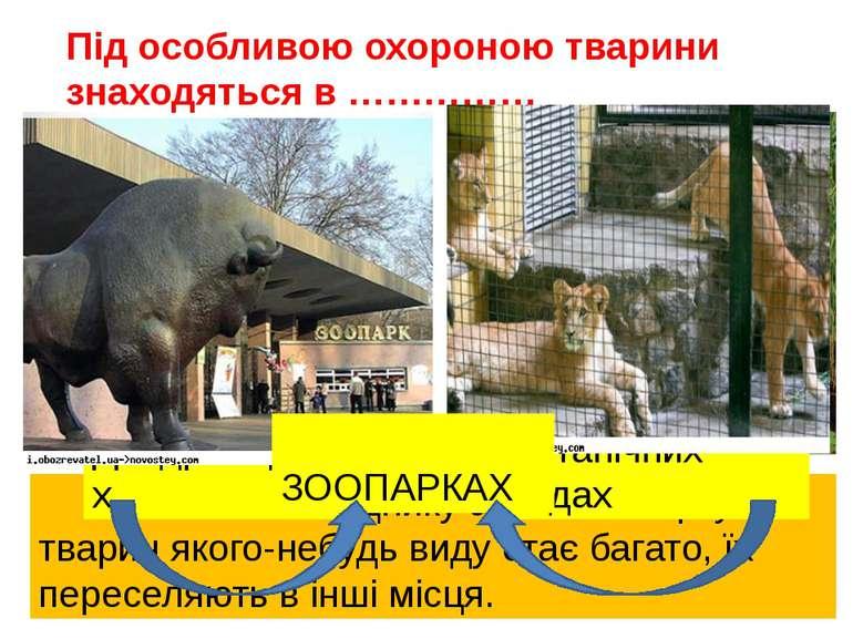 Коли в заповіднику або в зоопарку тварин якого-небудь виду стає багато, їх пе...