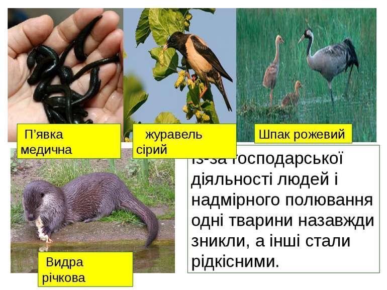 Із-за господарської діяльності людей і надмірного полювання одні тварини наза...