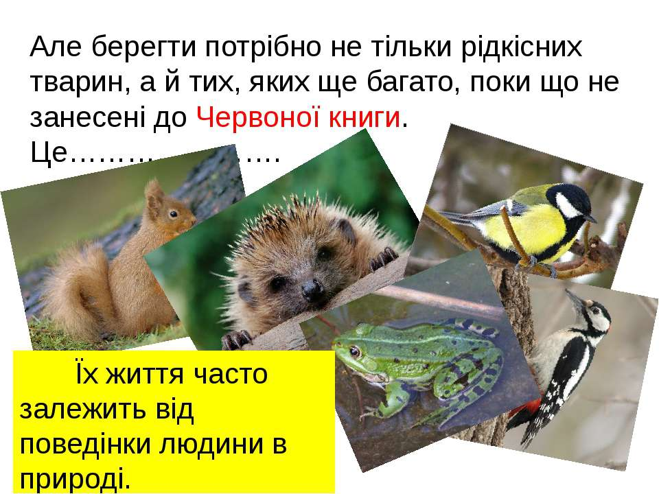Але берегти потрібно не тільки рідкісних тварин, а й тих, яких ще багато, пок...
