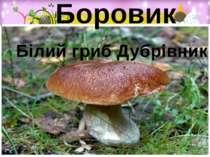 Боровик Білий гриб Дубрівник