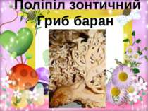 Поліпіл зонтичний Гриб баран