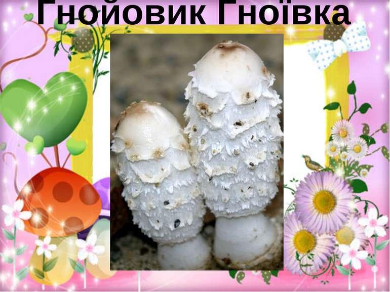 Гнойовик Гноївка біла