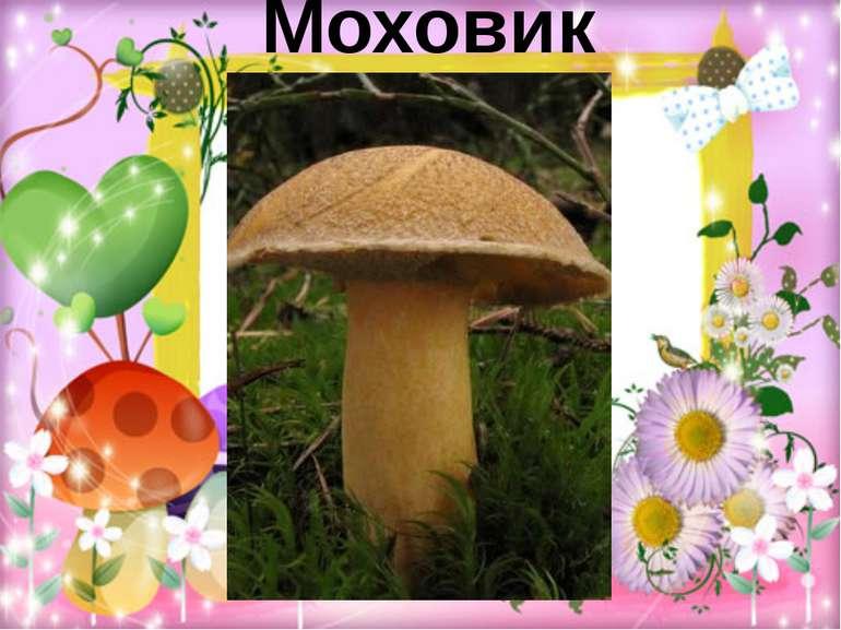 Моховик