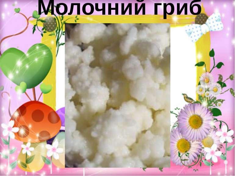Молочний гриб
