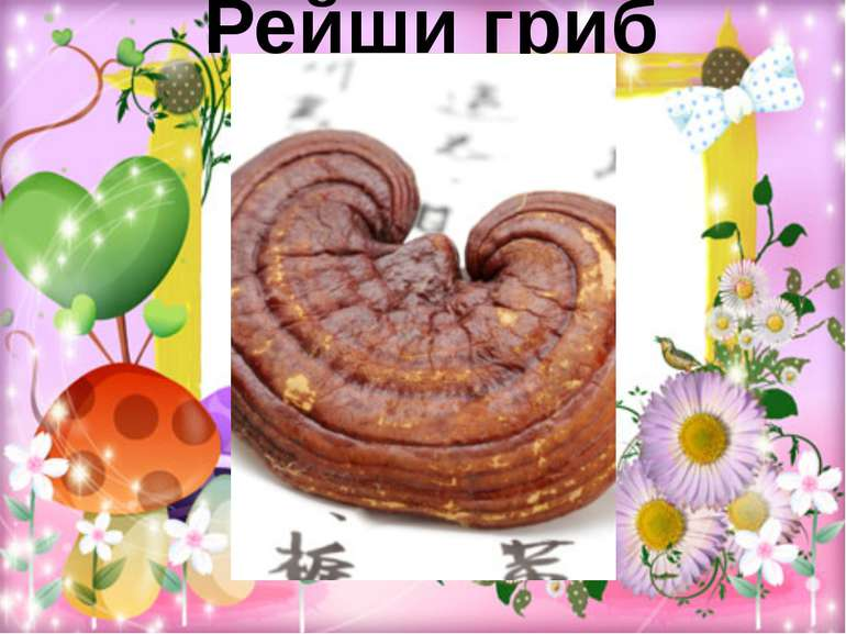 Рейши гриб