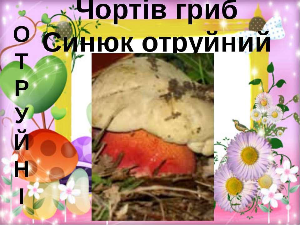 Чортів гриб Синюк отруйний О Т Р У Й Н І