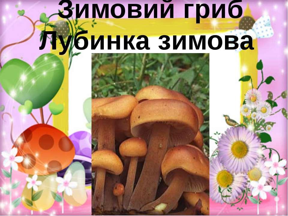 Зимовий гриб Лубинка зимова