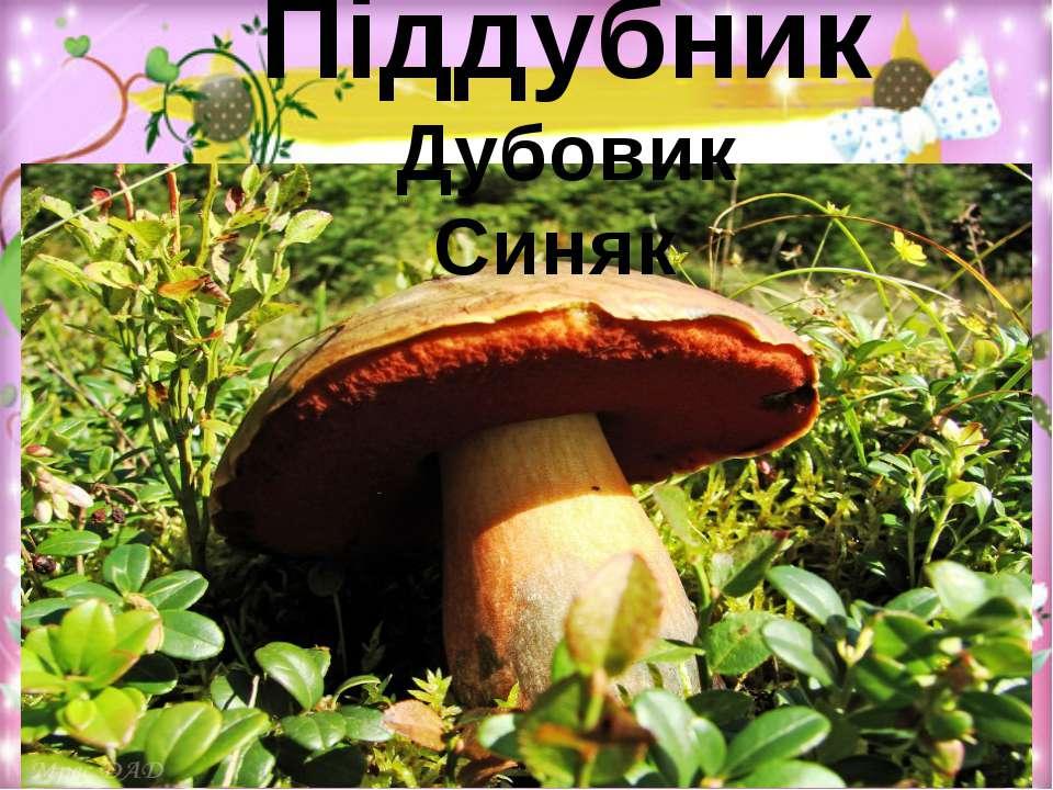 Піддубник Дубовик Синяк
