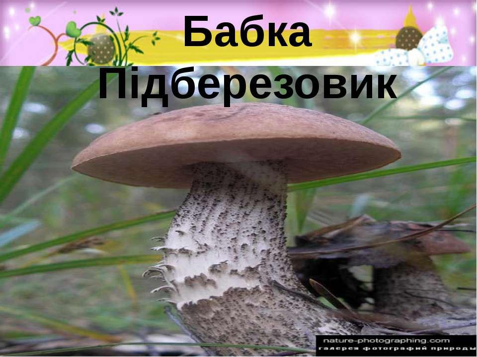Бабка Підберезовик