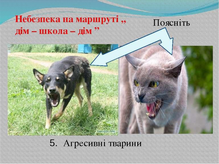 """Небезпека на маршруті ,, дім – школа – дім """" Поясніть 5. Агресивні тварини"""