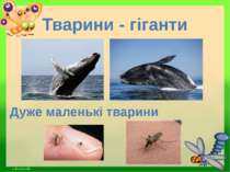 Тварини - гіганти Дуже маленькі тварини