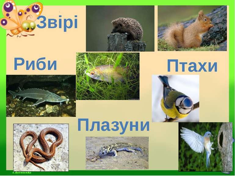 Риби Звірі Птахи Плазуни