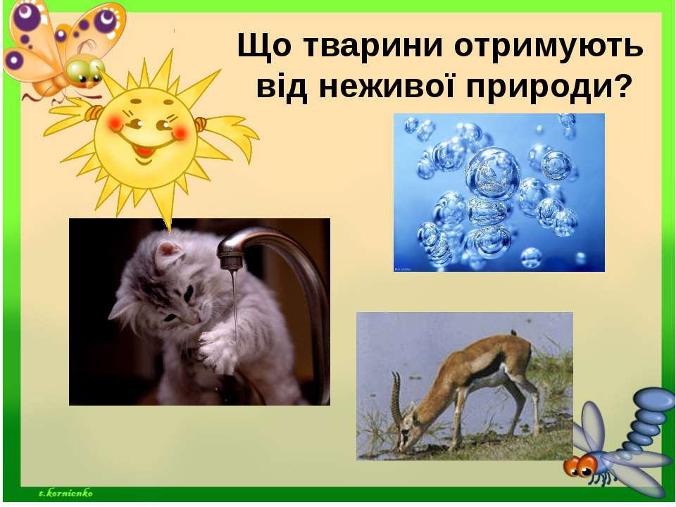 Що тварини отримують від неживої природи?