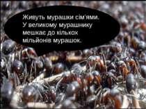 Живуть мурашки сім'ями. У великому мурашнику мешкає до кількох мільйонів мура...