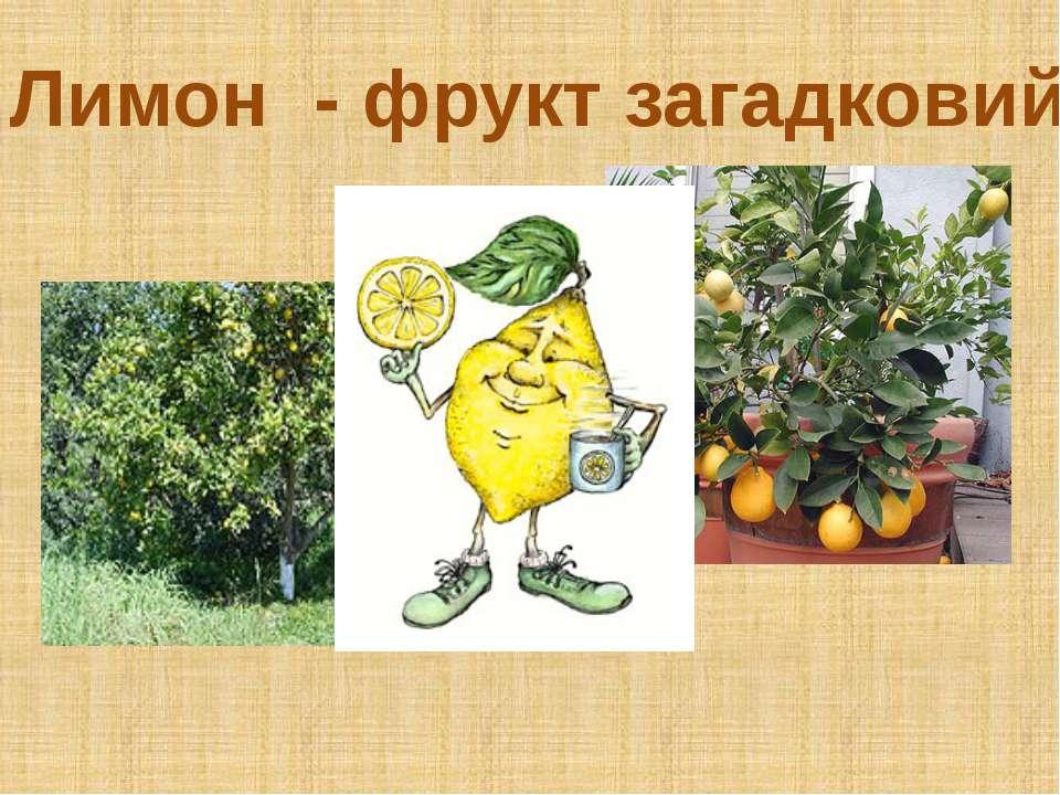 Лимон - фрукт загадковий