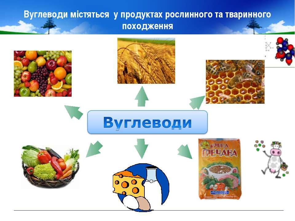 Вуглеводи містяться у продуктах рослинного та тваринного походження