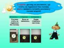 2 група: догляд за рослиною, що стоїть на підвіконні без поливу (мета: виявит...