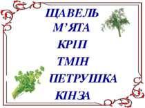 ЩАВЕЛЬ М'ЯТА ТМІН ПЕТРУШКА КІНЗА КРІП