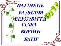 ПАГІНЕЦЬ БАДИЛЛЯ ВЕРХОВІТТЯ ГІЛКА КОРІНЬ БАТІГ