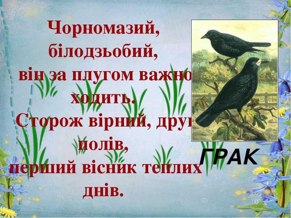 Чорномазий, білодзьобий, він за плугом важно ходить. Сторож вірний, друг полі...
