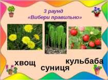 3 раунд «Вибери правильно» кульбаба суниця хвощ «Вибери правильно» Малюнки р...
