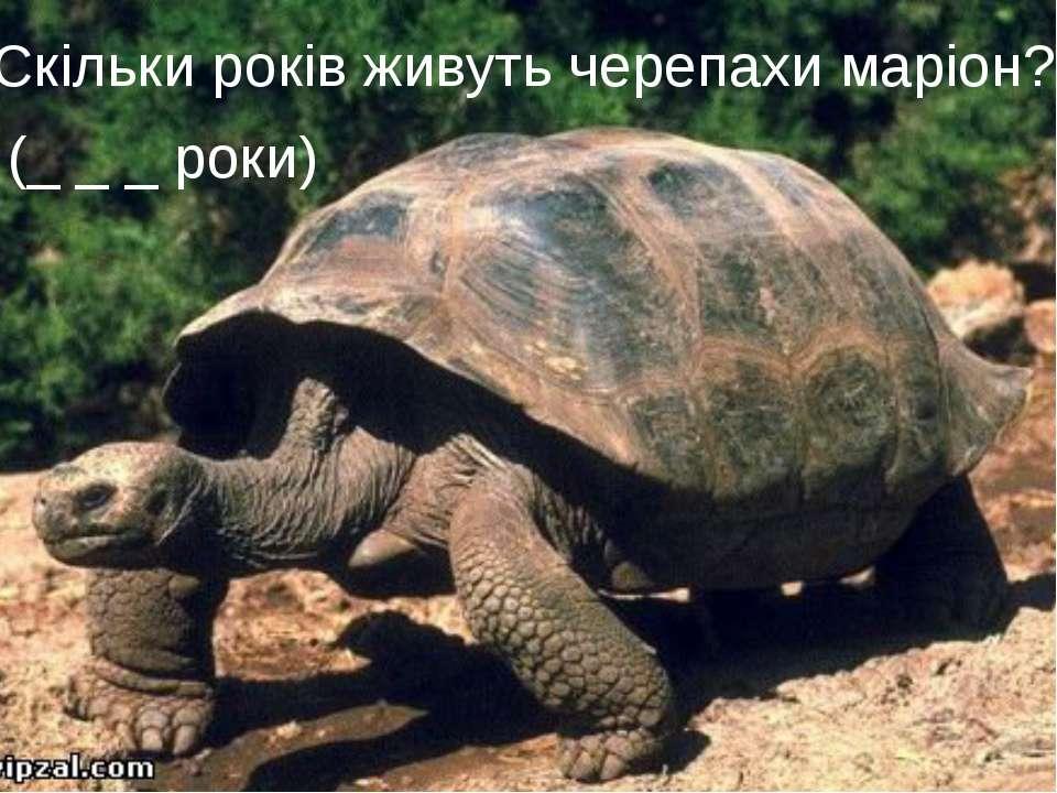 7 раунд «Статистика» або «Вгадай число»  Скільки років живуть черепахи ма...