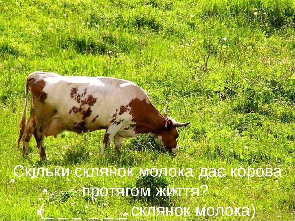Скільки склянок молока дає корова протягом життя? (_ _ _ _ _ _ склянок моло...