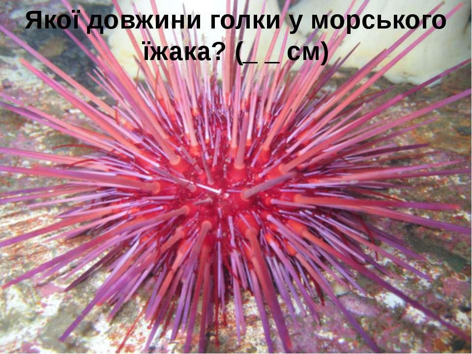 Якої довжини голки у морського їжака? (_ _ см) 5 запитань, які стосуються с...