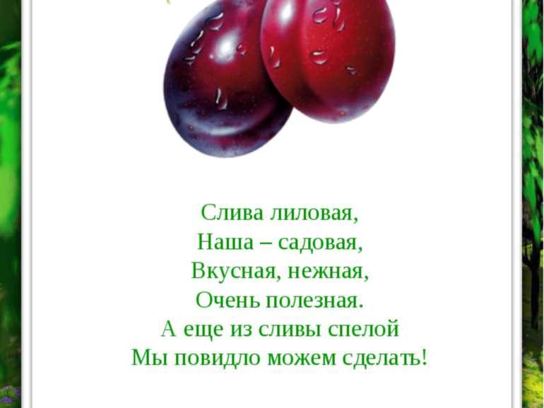 СЛИВА Слива лиловая, Наша – садовая, Вкусная, нежная, Очень полезная. А еще и...