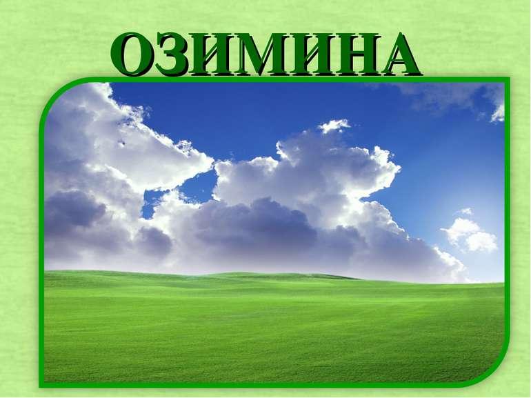 ОЗИМИНА