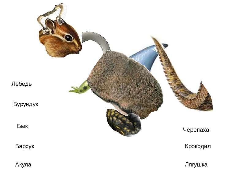 Лебедь Бурундук Бык Барсук Акула Черепаха Крокодил Лягушка