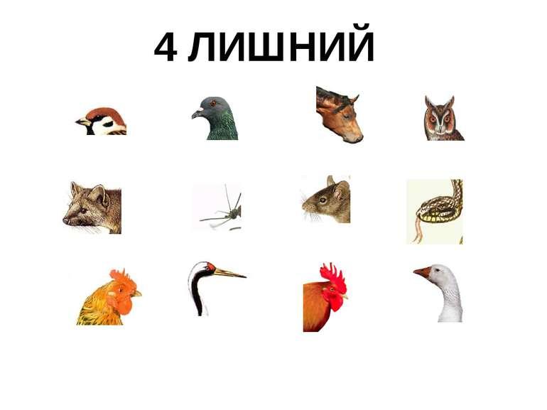 4 ЛИШНИЙ