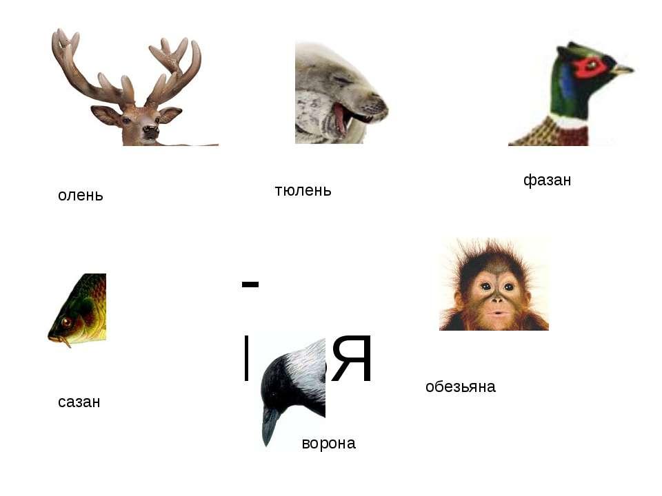 -НЬЯ олень тюлень ворона фазан сазан обезьяна