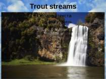 Trout streams
