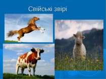Свійські звірі