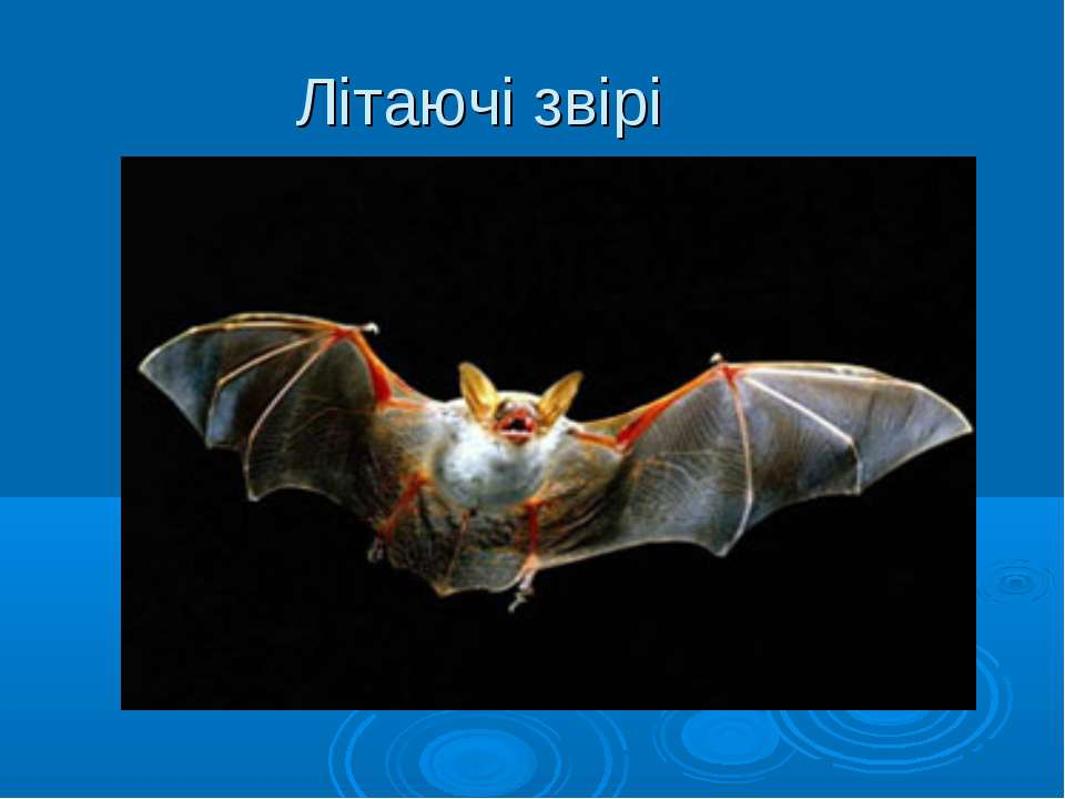 Літаючі звірі