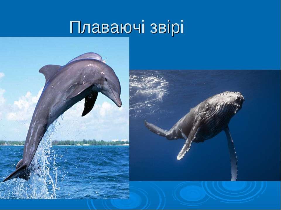 Плаваючі звірі