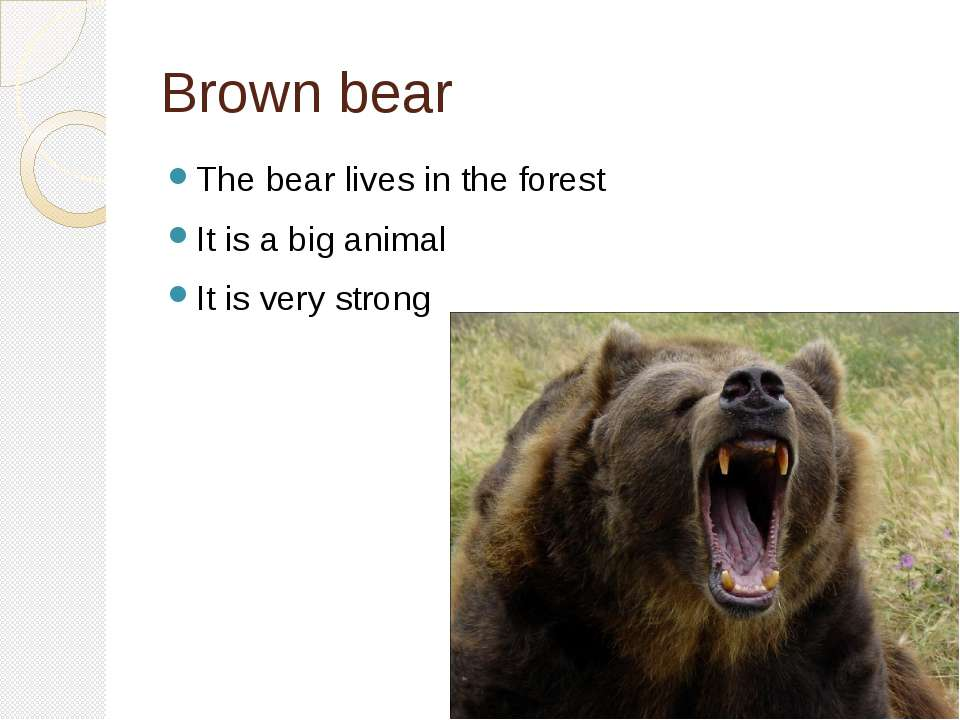 Brown bear The bear lives in the forest It is a big animal It is very strong