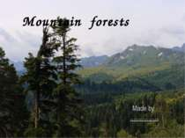 Mountain forests Made by ……………