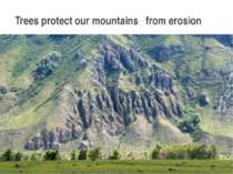 Trees protect our mountains from erosion