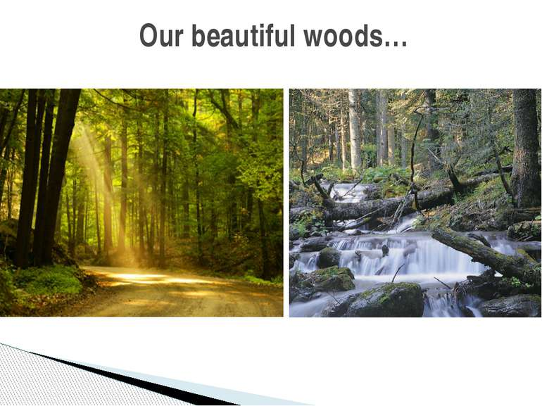 Our beautiful woods…