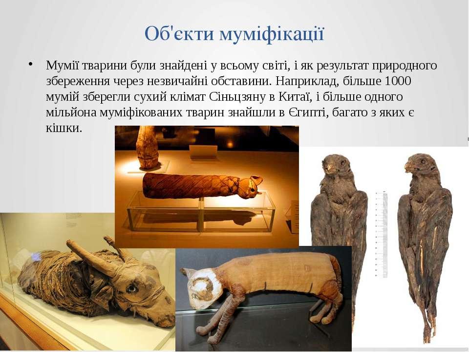 Об'єкти муміфікації Мумії тварини були знайдені у всьому світі, і як результа...