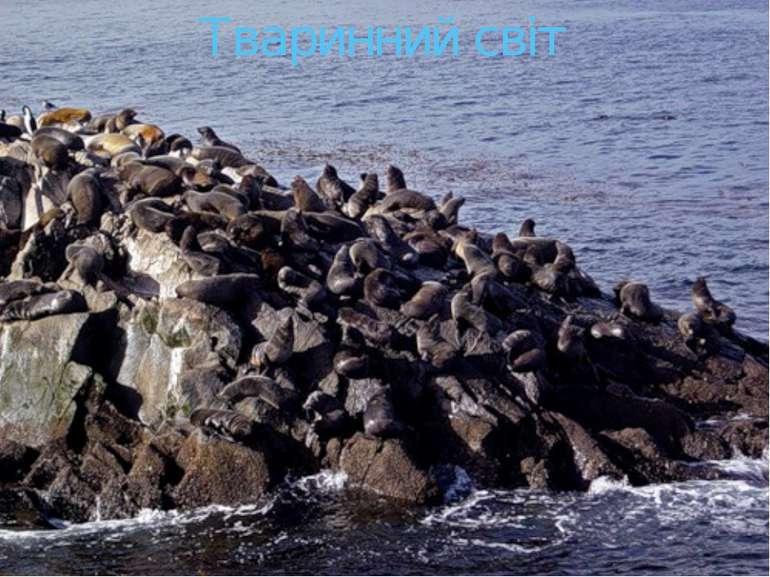 Тваринний світ Морські котики